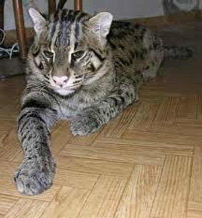 The Tuscany - A St Giles Signature Hotel: Jungle Cat