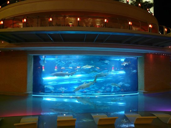 Golden Nugget Hotel: Acuario