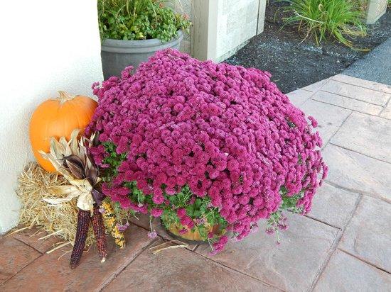 BEST WESTERN PLUS Augusta Civic Center Inn: Fall Decorations!