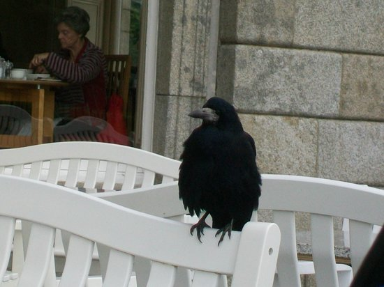 Terrace Cafe at Powerscourt: Lunch visitor