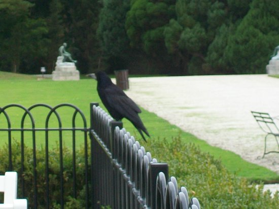 Terrace Cafe at Powerscourt: Fence hopping