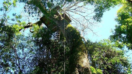 La Aldea de la Selva Lodge: BOSQUE ENTORNO HOTEL