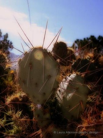 New Mexico Jeep Tours: Prickly pear -- wear heavy boots!