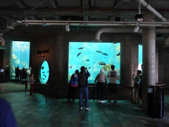 Aquario Picture Of Aquarium Of The Bay San Francisco