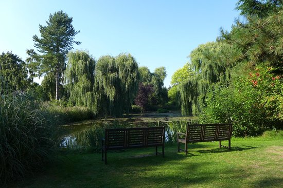 Gooderstone Water Gardens & Nature Trails: Weeping willows just add to the serene atmosphere..