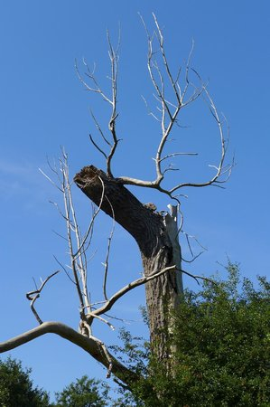 Gooderstone Water Gardens & Nature Trails: Could this be a deer...?
