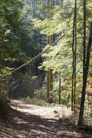 Hearthstone Lodge: safe wilderness