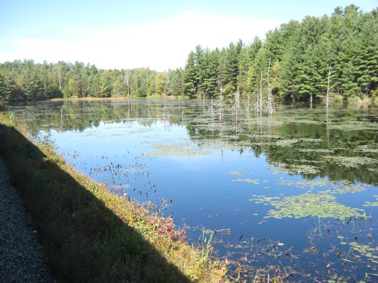 "Adirondack Scenic Railroad : The ""beaver dam"" lake."