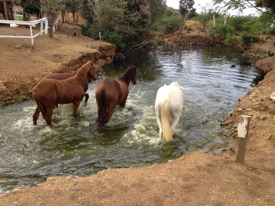 Lucky Stables: Playing in the water, cooling their bellies!