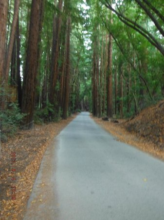 Pfeiffer Big Sur State Park: one of the roads in the park
