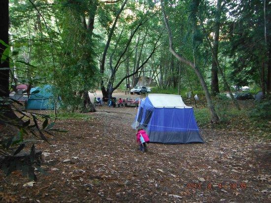 Pfeiffer Big Sur State Park: part of the campsite.