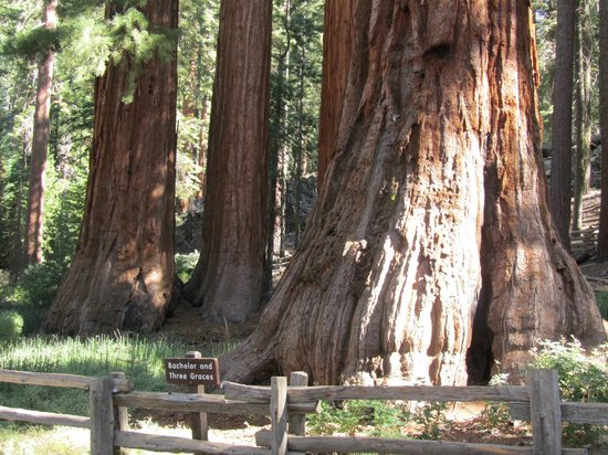 Discover Yosemite : One Of Many Stops!