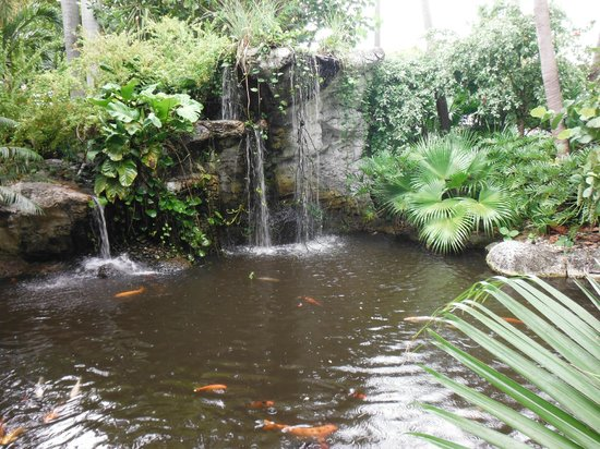 Embassy Suites by Hilton Fort Lauderdale 17th Street: koi pond