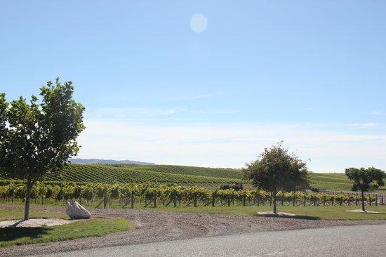 Yealands Estate Winery: Peter Yealands Vineyard