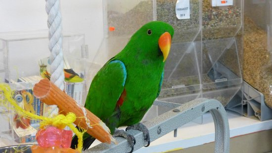 Black Hills Parrot Welfare & Education Center: Sept. 2013