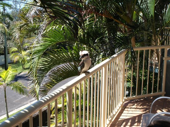 Mariner Bay Apartments: Friendly Kookaburra - private patio (off Living area)