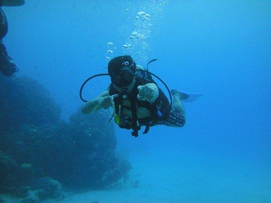 Sharky Dive Shop: Buceo