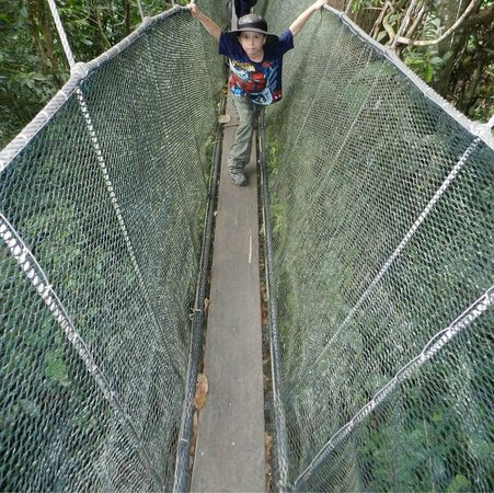 Canopy Walk: Dane Hodges high in the rainforests