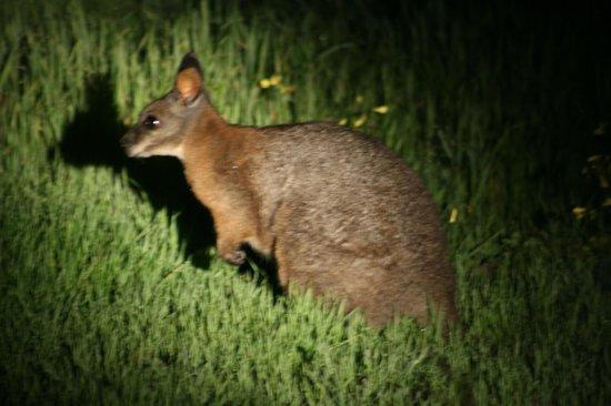 Kangaroo Island Hire a Guide: Guess who?