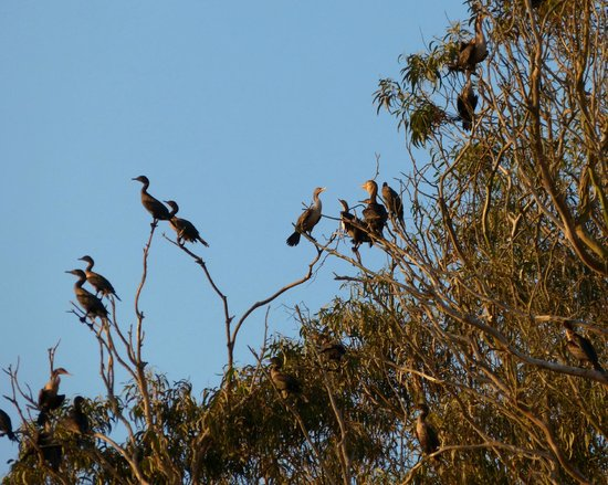 Inn at Morro Bay: Cormorants roosting
