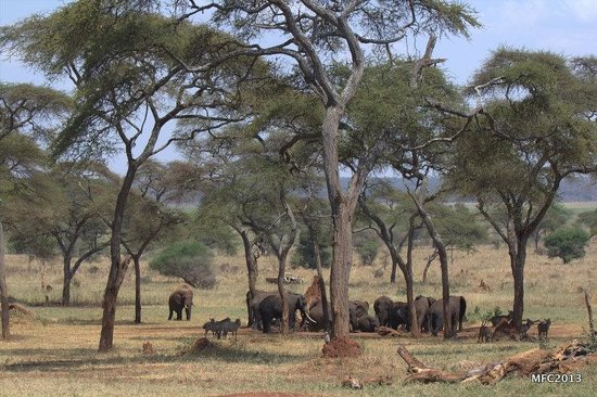 Sanctuary Swala : The view from our veranda