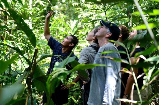 Sukau, Malaysia: Jungle Trekking