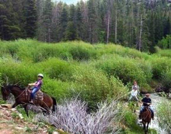 Beaver Meadows Resort Ranch : Beaver Meadows Stables