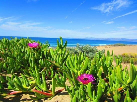 Estero Inn : Montana de Oro beach area