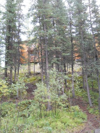Denali Grizzly Bear Cabins & Campground : View of rooms from stream