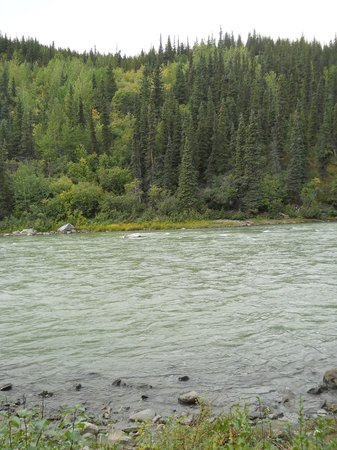 Denali Grizzly Bear Resort : Stream below rooms