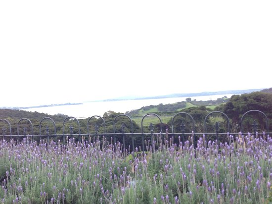 Mudbrick Vineyard & Restaurant : Nice view