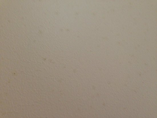 Ashmore Palms Holiday Village: mould on toilet wall