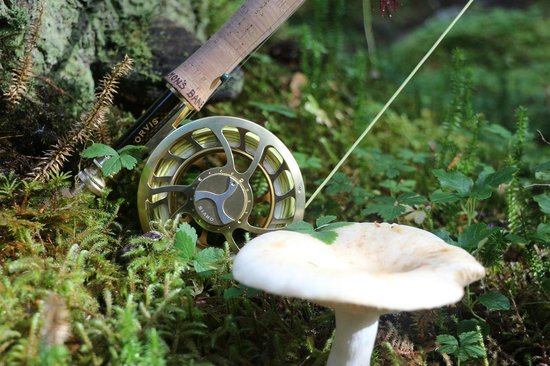 Glacier Bay Country Inn: Gratuitous Orvis rod shot in beautiful forest