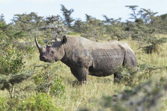 Porini Rhino Camp: Close to rhino