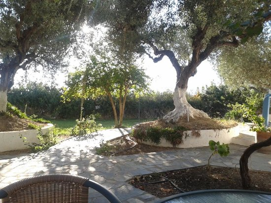 Palatia Village: Old olive trees in front of the apartment