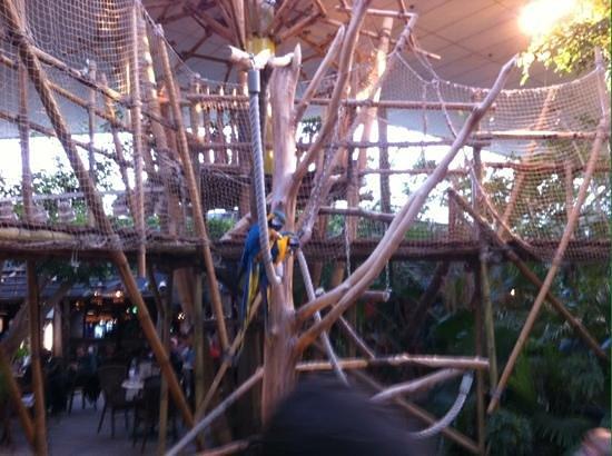 Center Parcs De Huttenheugte: Papagaaien in het plaza