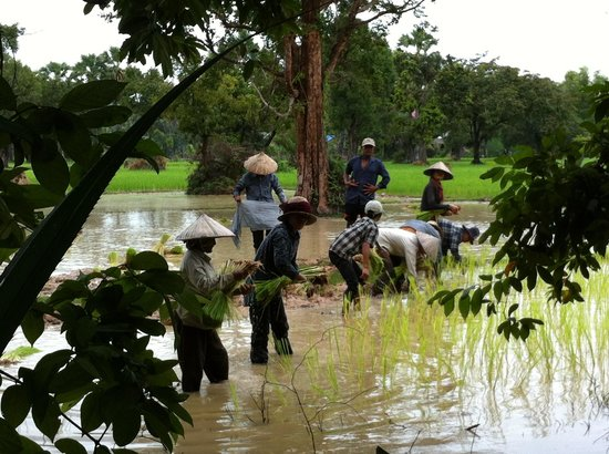 Chhayakim Private Angkor Wat Tours: Country tour more interesting then just shopping