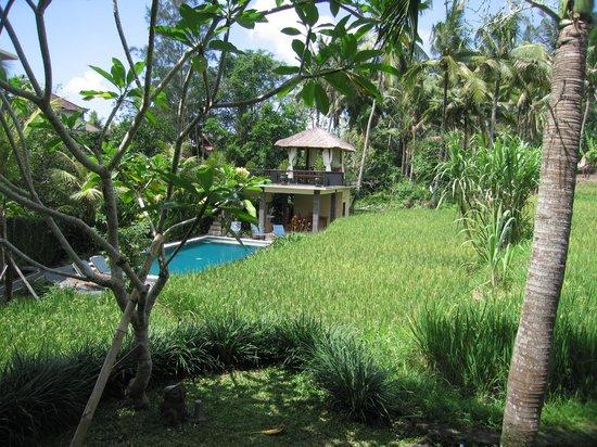 Biyukukung Suites and Spa: Hotel Pool
