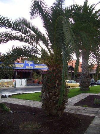 Apartmentos Puerto Caleta: visione dal tavolino fuori dalla camera
