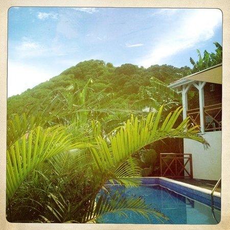 Chambres d'Hôtes Amarelao : Piscine