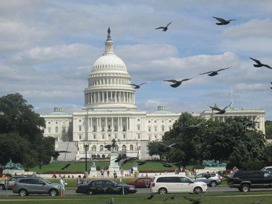 Pesce: Capitol