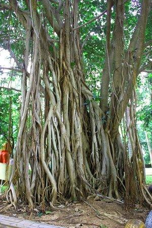 Pragathi Greenmeadows Resorts: Tree