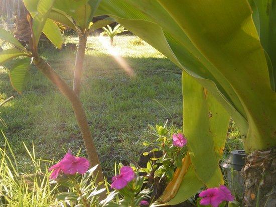 Cabanas Manatea: Jardines