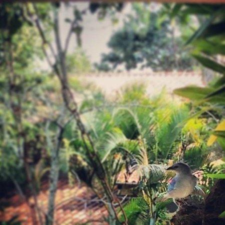Pousada Refugio das Pedras: Pássaros