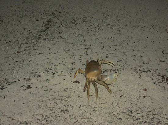 S Swept Away Crabs On The Beach At Night