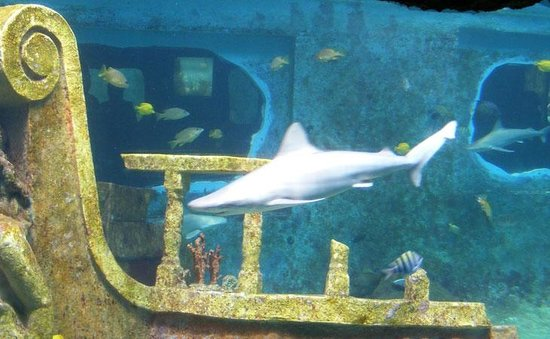 Arecibo Lighthouse & Historical Park : A shark in the tank