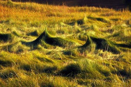Rachel Carson National Wildlife Refuge: grass tufts