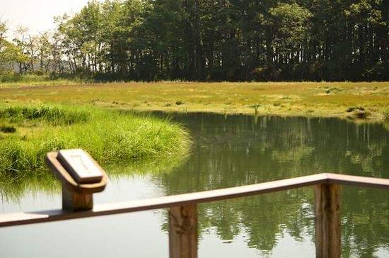 Rachel Carson National Wildlife Refuge : wetlands view