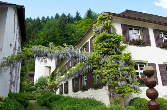 Romantik Hotel Spielweg : Wisteria growing on the main building