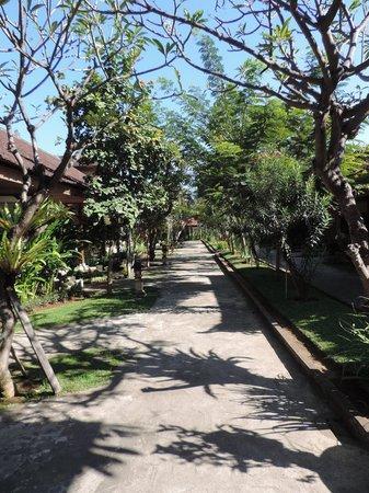 Sunari Beach Resort: lush greenery